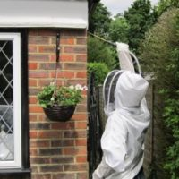wasp control in basingstoke, andover & Winchester